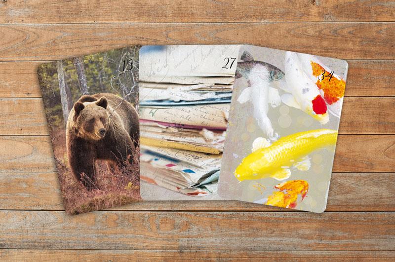 Deutung der Lenormandkarten Kombination Bär, Brief und Fische