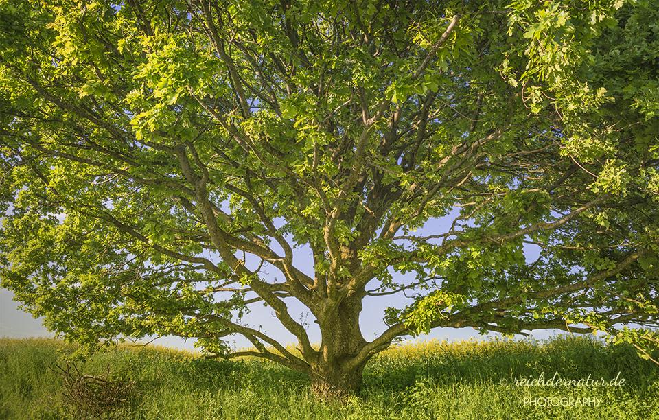 Der Lebensbaum_DSC6422-web