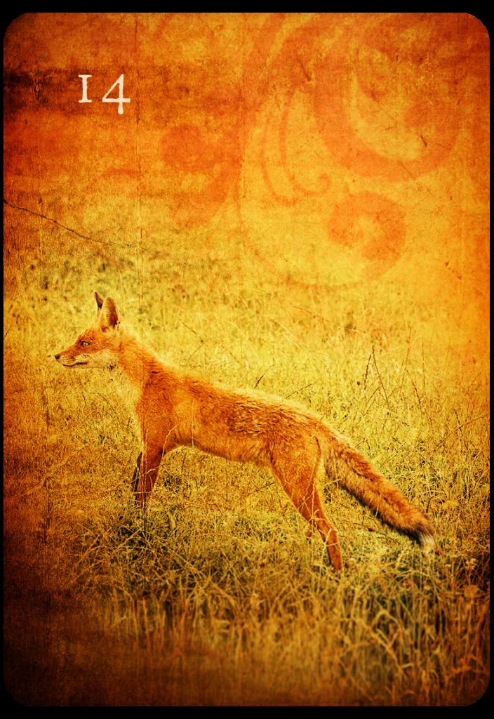 Deutung der Lenormand Kombination Sterne und Blumen mit Fuchs